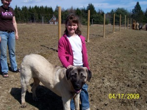 Olivia with a herd dog